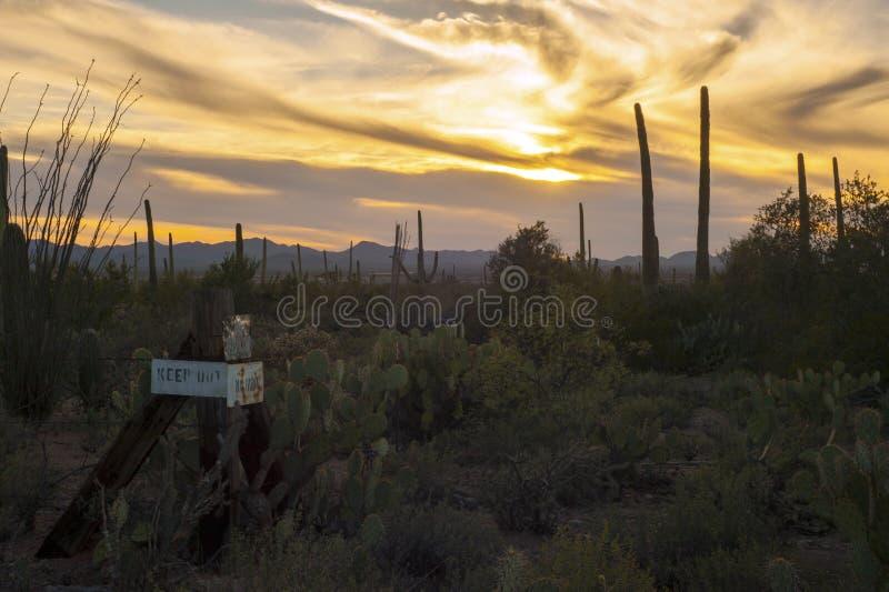 Uppehälle ut ur Saguarokaktusöken på solnedgången royaltyfri bild