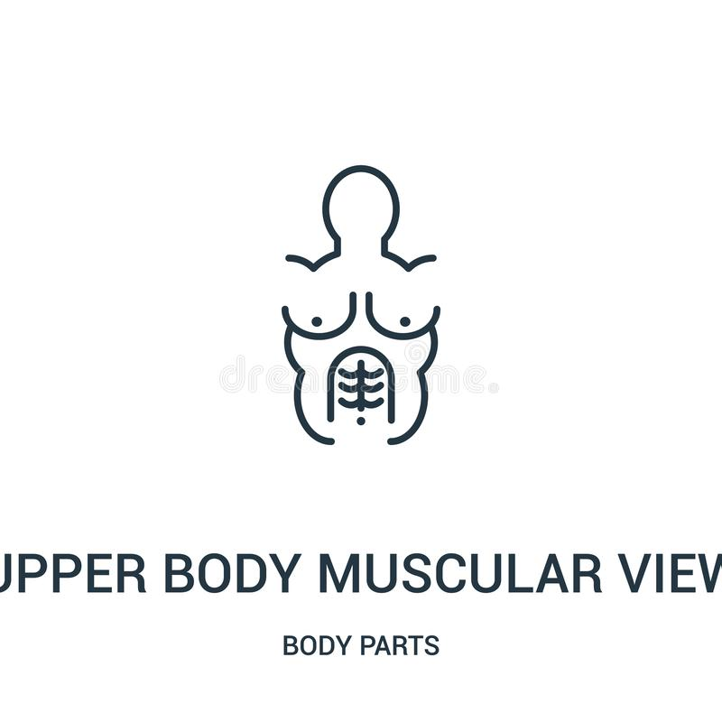 Upper body muscular view icon vector from body parts collection. Thin line upper body muscular view outline icon vector. Illustration. Linear symbol for use on royalty free illustration