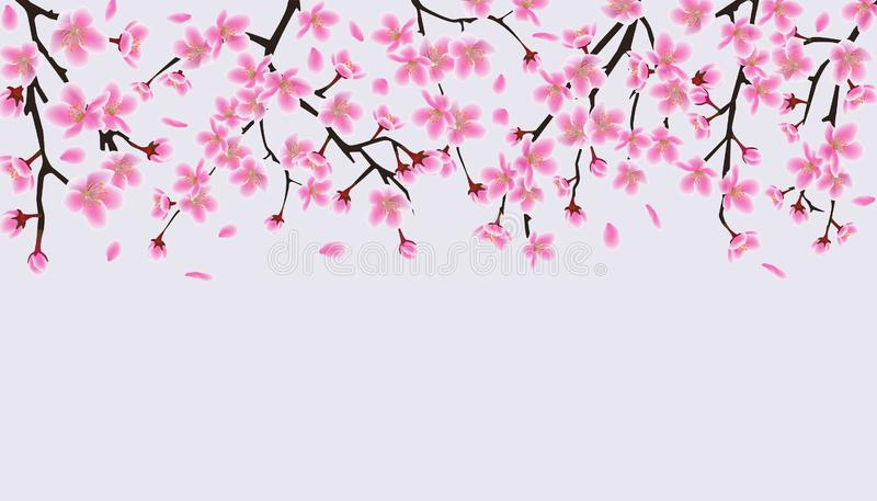 Upper frame border with blooming cherry or sakura vector illustration isolated. stock illustration