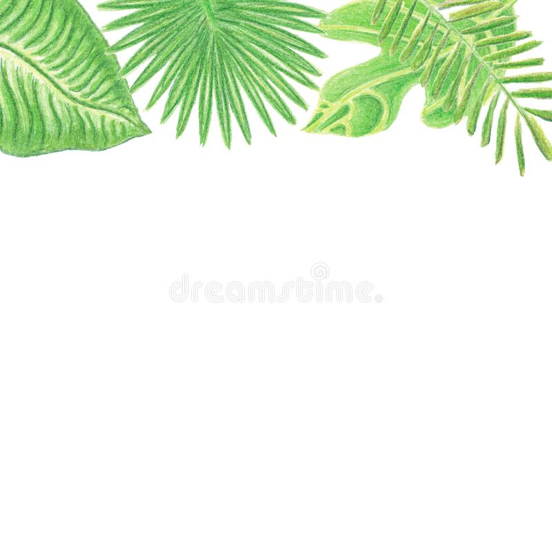 Upper frame with watercolor colored pencils hand drawn tropic leaves. Up side frame with watercolor pencils hand drawn tropic leaves isolated on white background royalty free stock photos