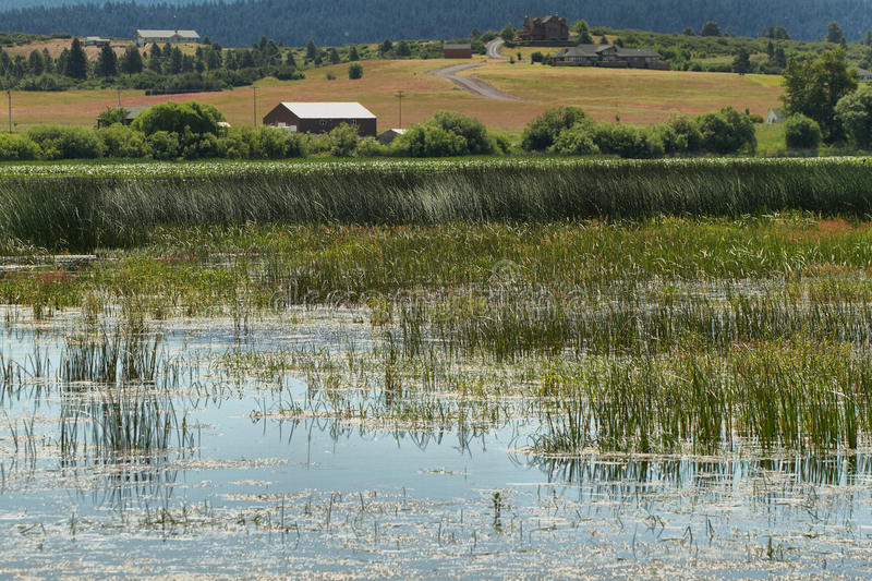 Upper Klamath National Wildlife Refuge. Oregon royalty free stock photography
