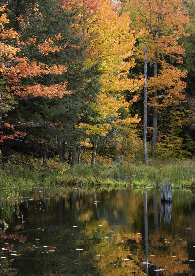 Upper Michigan Fall Colors By Quiet Stream Royalty Free Stock Photography