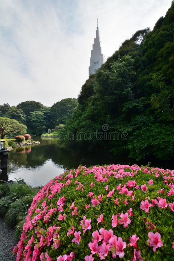 Upper pond and NTT Docomo Yoyogi building. Shinjuku Gyoen national garden. Tokyo. Japan. Shinjuku Gyoen is a large park and garden in Shinjuku and Shibuya, Tokyo royalty free stock photography