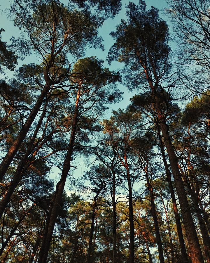 Upper view. Forest trees sky blue vsco leaves royalty free stock image