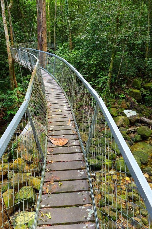 Upphängning överbryggar walkwayen, den Borneo rainforesten arkivfoto