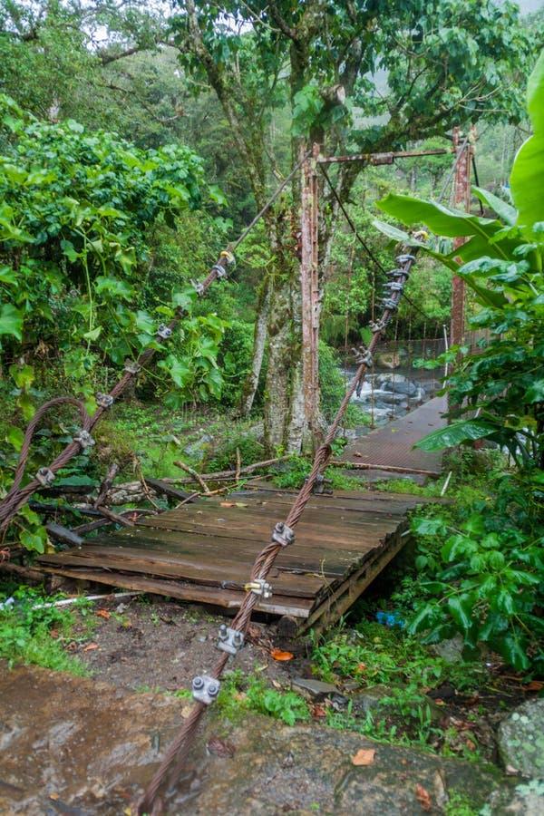 Upphängningbro över Calderafloden nära Boquete Panama, på Lost vattenfall som fotvandrar trai arkivbild