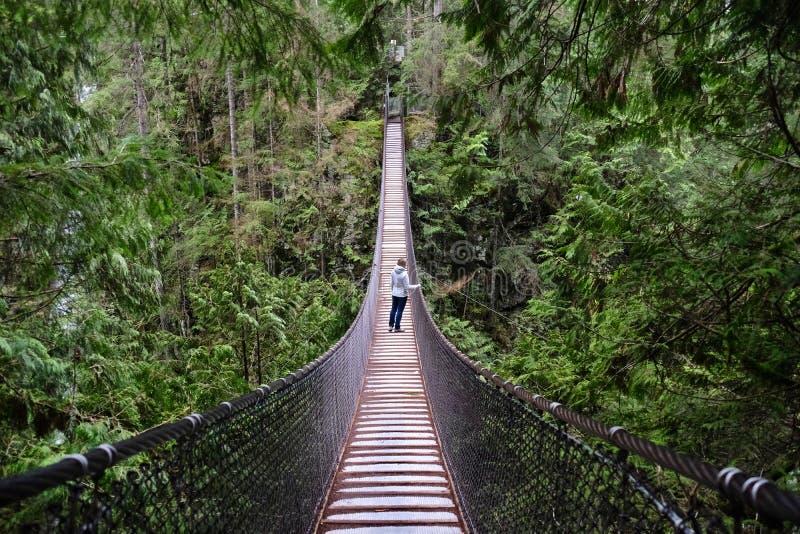 Upphängningbro över kanjonen i regnskog arkivbilder