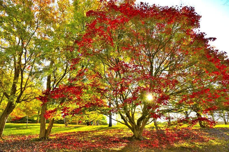Upphöjda botaniska trädgårdar för montering royaltyfri foto