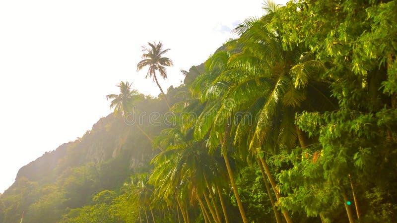 Upplyst ljus sol för djungel Filippinerna för El Nido Palawan royaltyfria foton