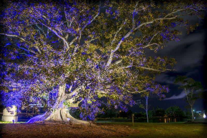 Upplyst träd förutom Emerald Lakes royaltyfria foton
