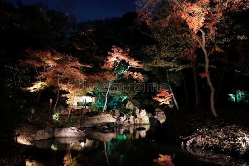 Upplysta Autumn Garden arkivfoton