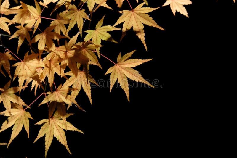 Upplysta Autumn Garden royaltyfri foto