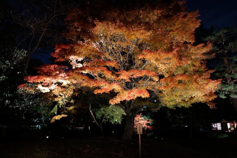Upplysta Autumn Garden fotografering för bildbyråer