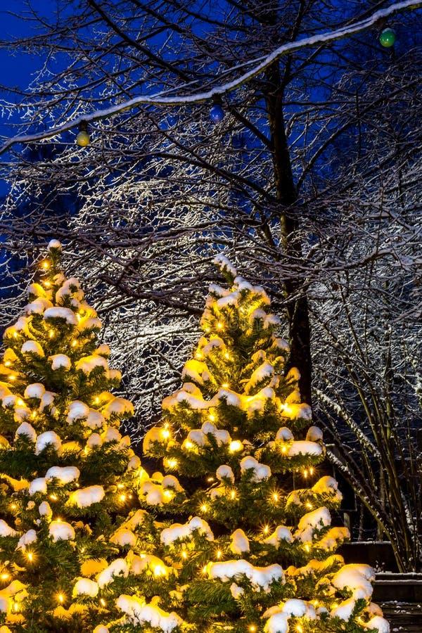 Upplysta träd för jul - snöig aftonplats royaltyfria foton