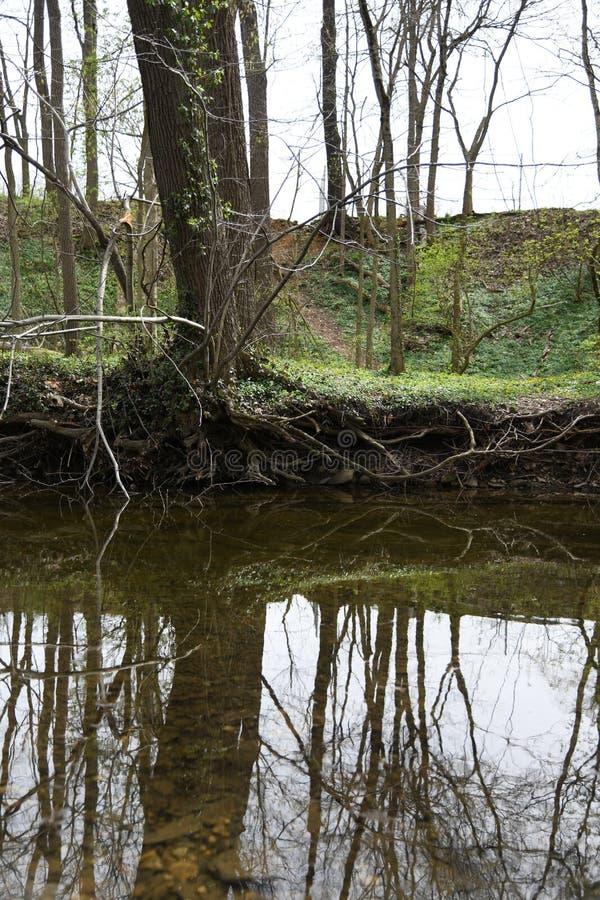 Uppochnervänd träd sjö royaltyfri fotografi