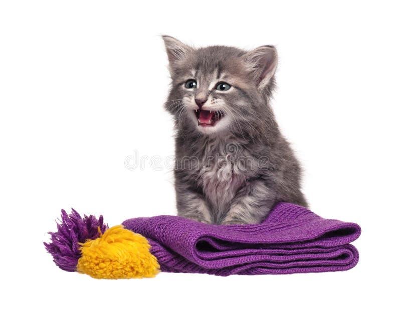 Uppriven kattunge arkivfoton