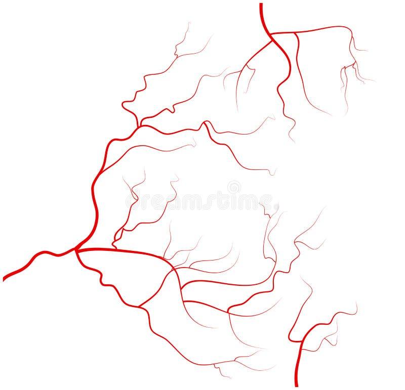 Uppsättning av åder för mänskligt öga, röda blodkärl, blodsystem white för vektor för bakgrundsillustrationhaj royaltyfri fotografi
