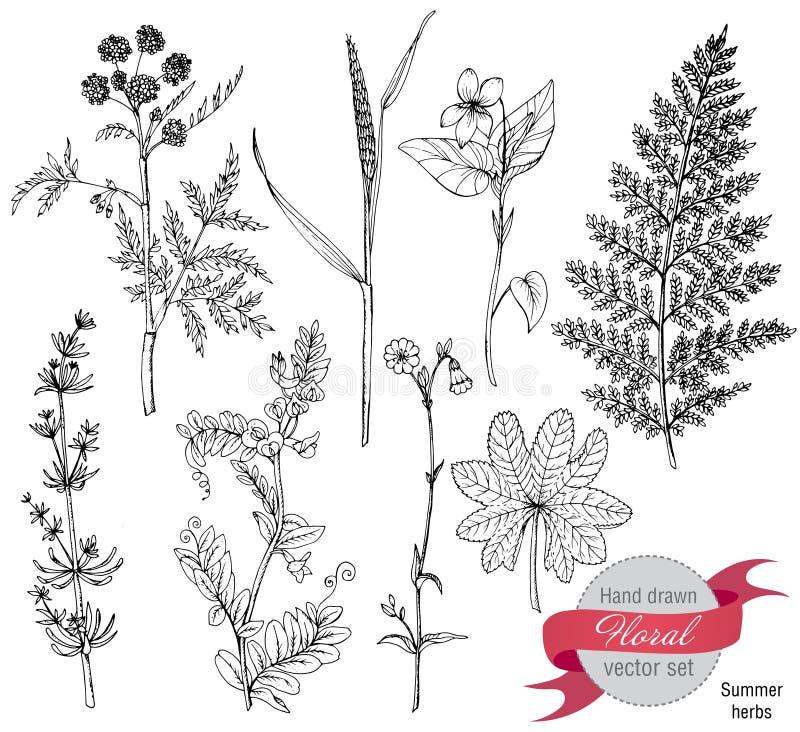 Uppsättning av örter och blommor, hand dragen vektorillustration stock illustrationer