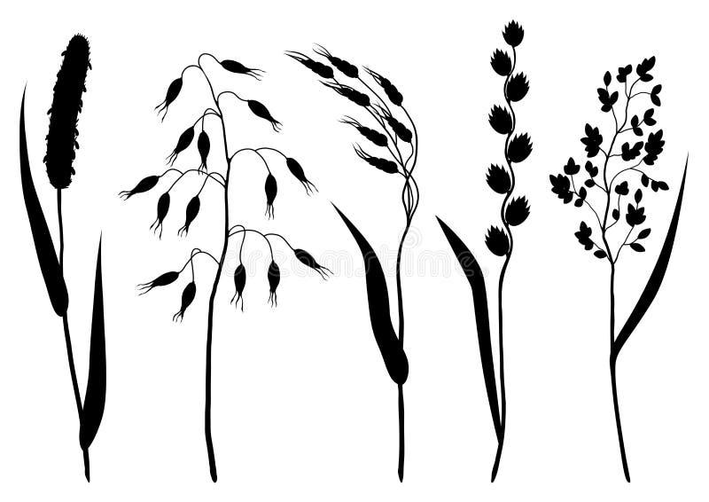 Uppsättning av örter och konturer för sädes- gräs Blom- samling med ängväxter stock illustrationer