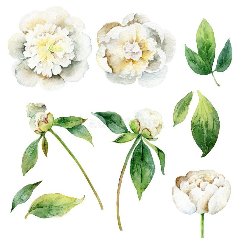 Uppsättning av blom- beståndsdelar på vit bakgrund royaltyfri illustrationer