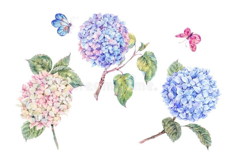 Uppsättning av blommande vattenfärgfilialvanliga hortensior och fjärilar stock illustrationer