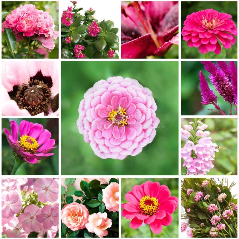 Uppsättning Av Blommor Arkivbilder