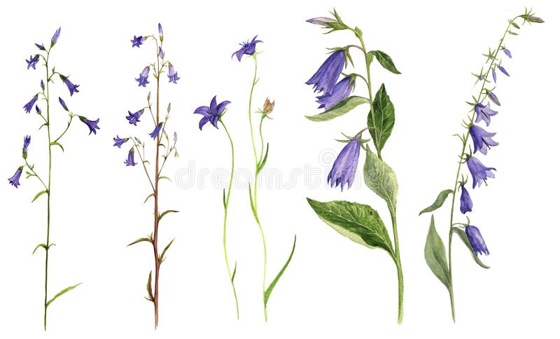 Uppsättning av blommor för vattenfärgteckningsklocka stock illustrationer
