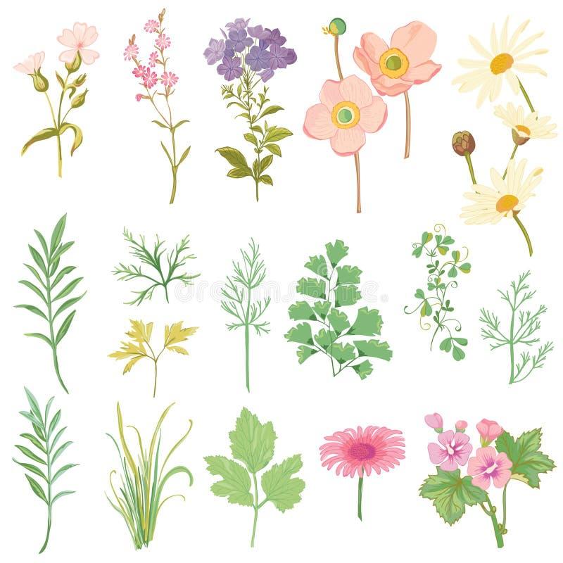 Uppsättning av blommor och örter royaltyfri illustrationer
