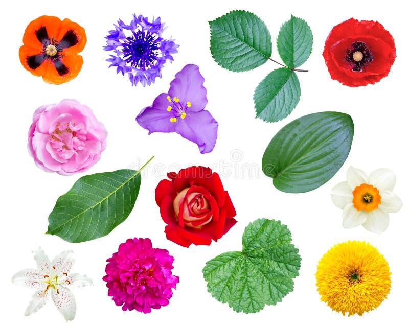 Uppsättning av blommor och sidor arkivbilder