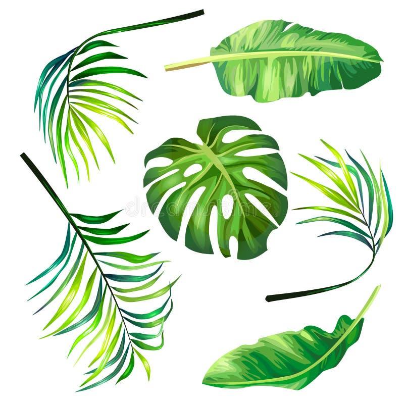 Uppsättning av botaniska vektorillustrationer av tropiska palmblad i en realistisk stil royaltyfri illustrationer