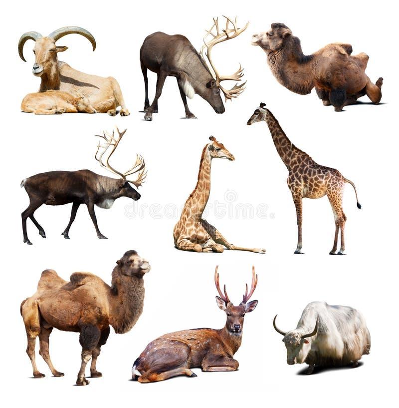 Uppsättning av däggdjurs- djur över vit bakgrund med skuggor arkivbild