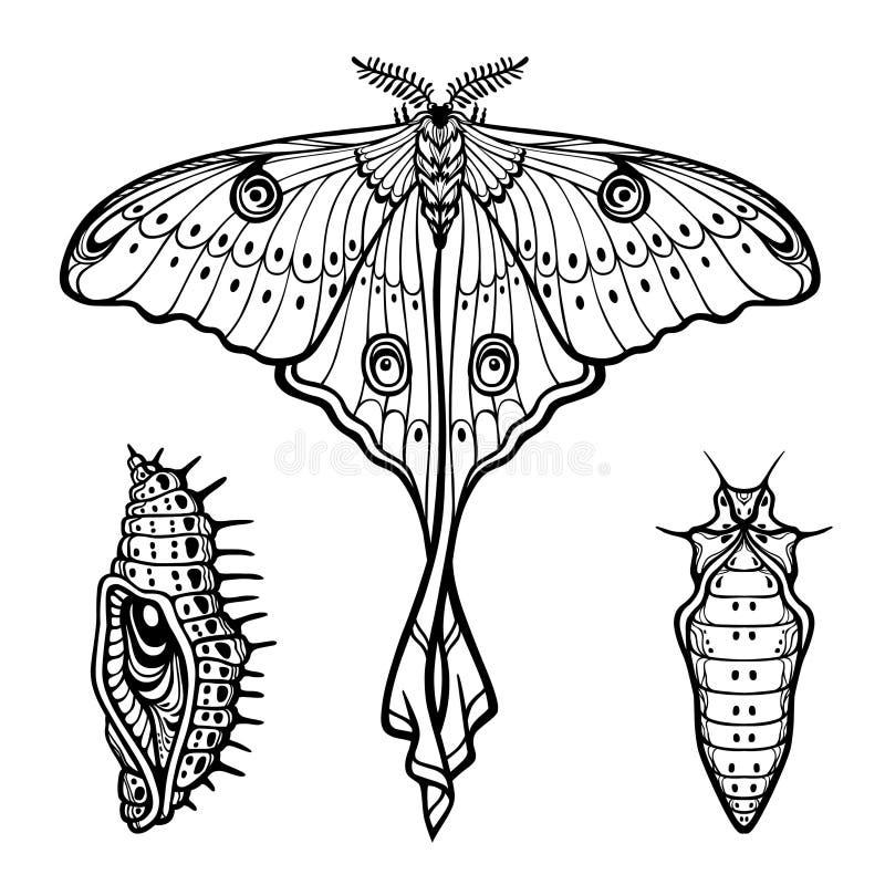 Uppsättning av dekorativa beståndsdelar: fjäril docka, larv, radiolaria vektor illustrationer