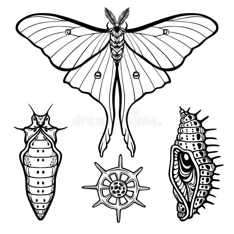 Uppsättning av dekorativa beståndsdelar: fjäril docka, larv, radiolaria royaltyfri illustrationer