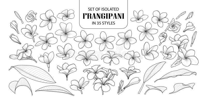 Uppsättning av den isolerade frangipanien i 35 stilar royaltyfri illustrationer