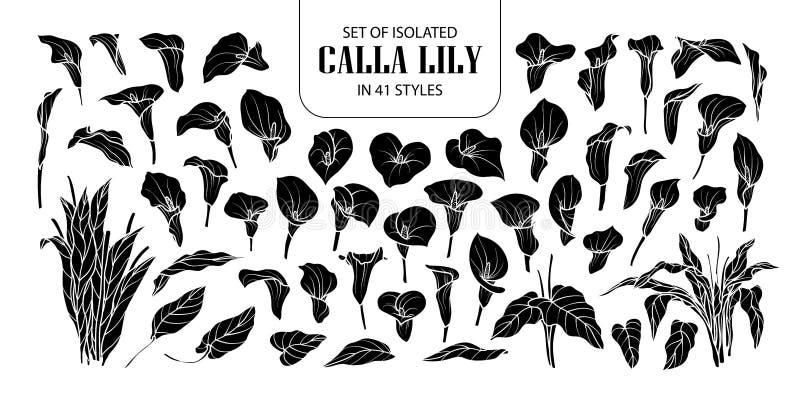 Uppsättning av den isolerade konturCallaliljan i 41 stilar Hyvlar den gulliga handen drog blommavektorillustrationen i den vita ö stock illustrationer
