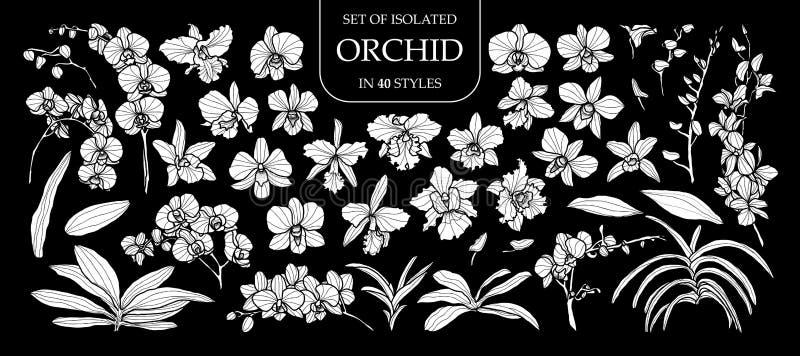 Uppsättning av den isolerade vita konturorkidén i 40 stilar Gullig hand dragen blommavektorillustration i den vita nivån och inge stock illustrationer