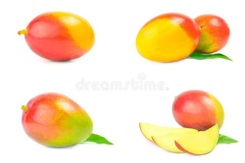 Uppsättning av den röda mango arkivbilder