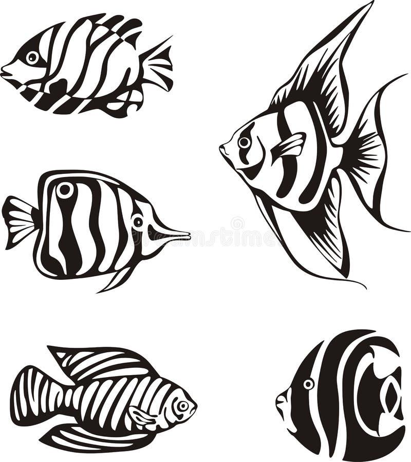 Uppsättning av den svartvita tropiska fisken vektor illustrationer