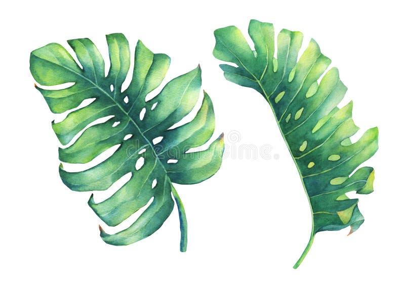 Uppsättning av det stora tropiska gröna bladet av den Monstera växten royaltyfri illustrationer