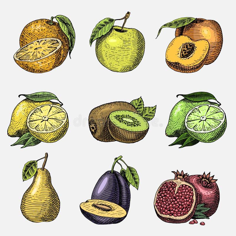 Uppsättning av drog inristade nya frukter för hand, vegetarisk mat, växter, tappningapelsin, äpple och kiwi, citron och limefrukt vektor illustrationer