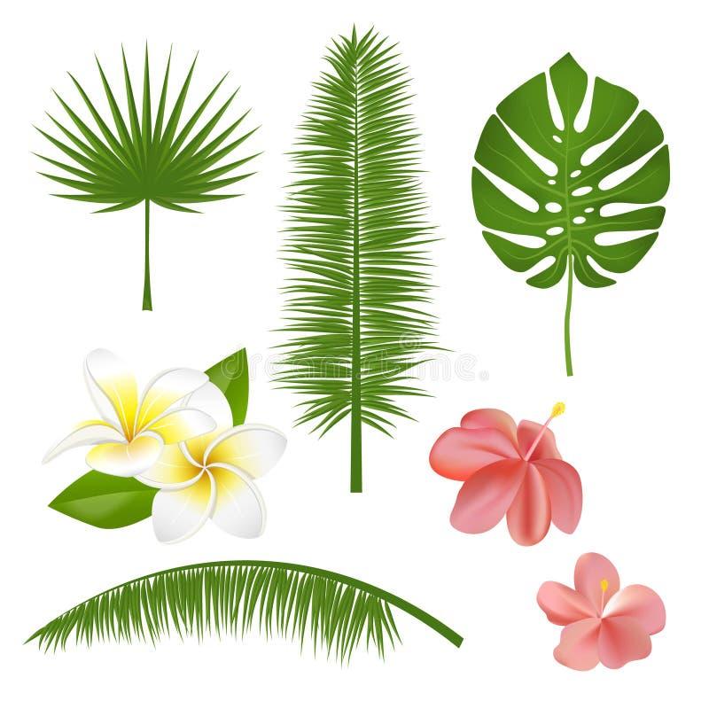 Uppsättning av exotiska tropiska blommor, växter, sidor Vektorillustrationen med realistiskt gömma i handflatan, spricker ut, hib vektor illustrationer