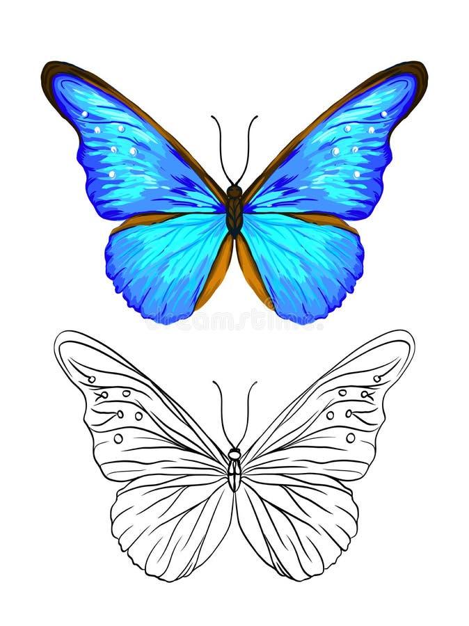 Uppsättning av färg- och översiktsbilder av en fjäril stock illustrationer