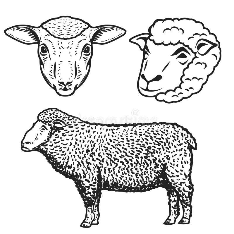 Uppsättning av fårillustrationerna som isoleras på vit bakgrund des stock illustrationer