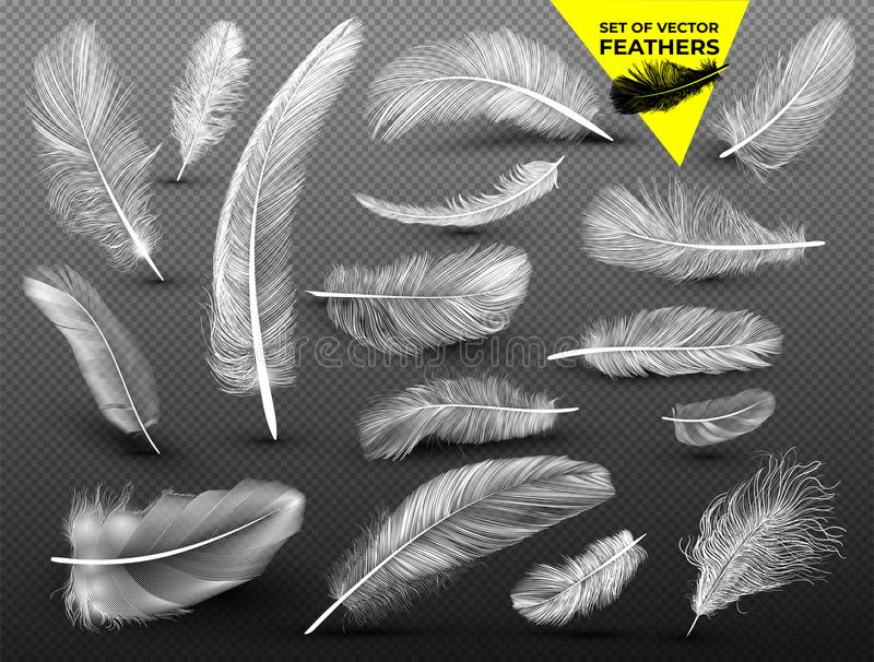 Uppsättning av fallande vita fluffiga snurrade fjädrar på i realistisk stil Dragit by räcka Vektorvektorillustration Isolerat på  royaltyfri illustrationer