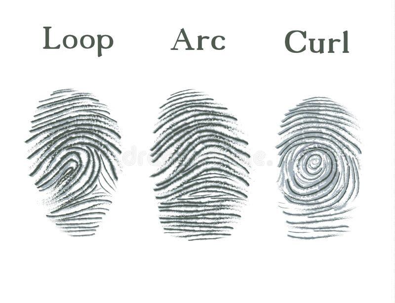 Uppsättning av fingeravtrycksymboler, fingeravtryck för ID-säkerhetsidentitet Ögla båge, krullning vektor illustrationer