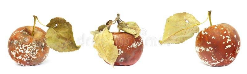 Uppsättning av formen som växer på det gamla äpplet Isolerat på det vita bakgrundsfotoet Matförorening, bad spolierade äcklig rut arkivbilder