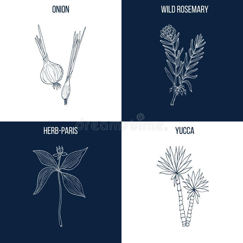Uppsättning av fyra hand drog matvara och medicinalväxter stock illustrationer