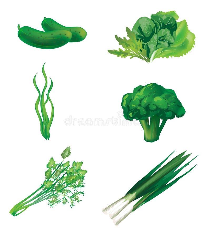 Uppsättning av gröna grönsaker vektor illustrationer