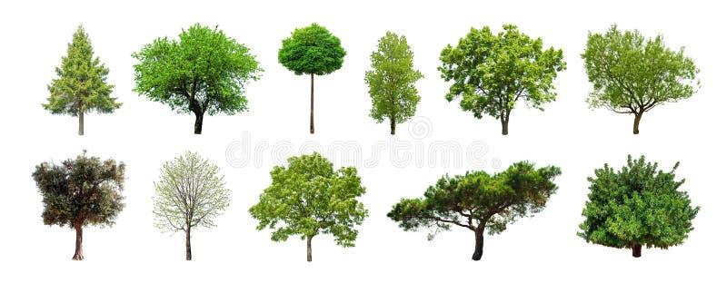 Uppsättning av gröna träd som isoleras på vit bakgrund arkivbild