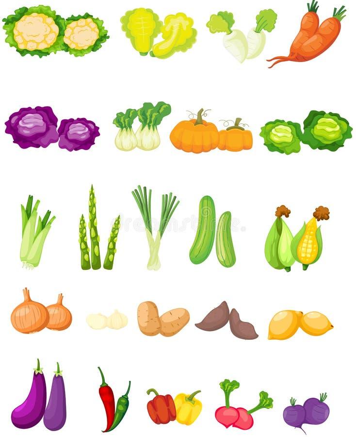 Uppsättning av grönsaker vektor illustrationer